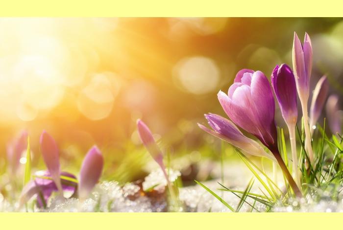 Les horaires de printemps