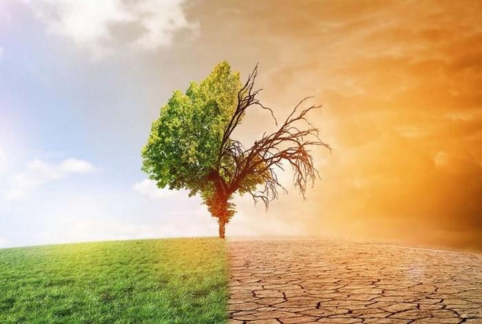Conférence en ligne «L'arbre et le climat»